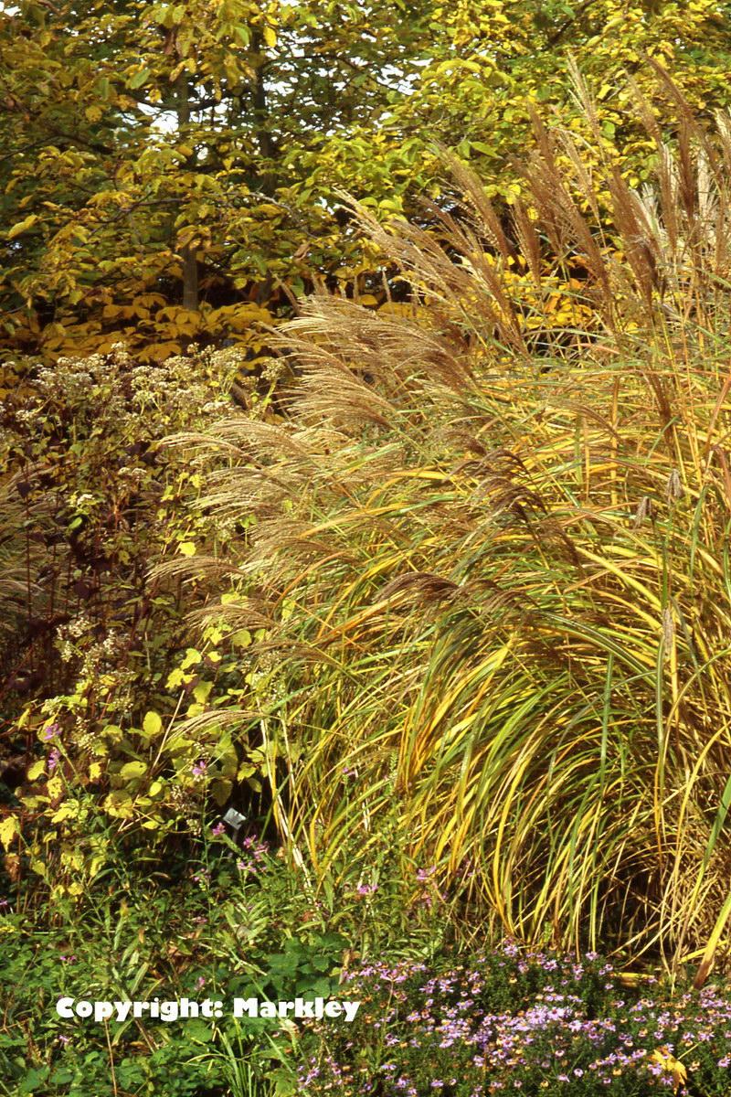 Gräser Bambus Farne Wasserpflanzen GartenBaumschule